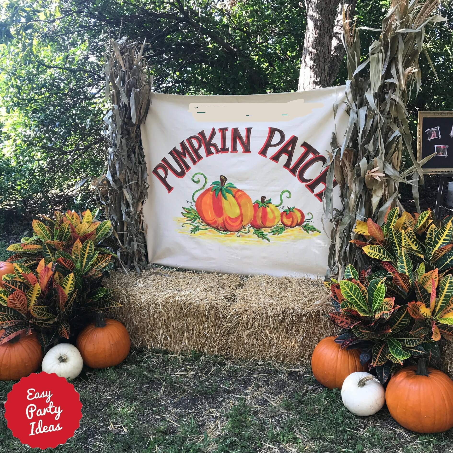 Pumpkin Patch Fall Photo Backdrop